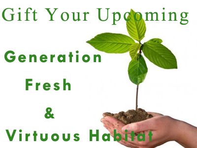 Gift Your Upcoming Generation Fresh And Virtuous Habitat By Planting Trees