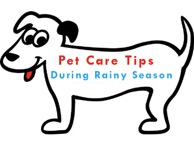 Pet Care Tips During Rainy Season